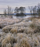 14 Below, Loch Garten, Cairngorms, Scotland, delicate, palette, temperature, winter, frost, colour, island, scots pine   photo