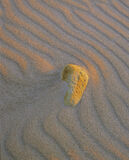 An Ear to the Ground, Lossiemouth, Moray, Scotland, weathered, sandstone, pitted, beach, stone, ear, artistic, sand photo
