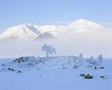 Arctic Rannoch, Rannoch Moor, Glencoe, Scotland, snow, ice, moor, glen, island, tree, shadow, peaks, Blackmount, blue, p photo