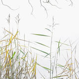 Art At The Edge, Loch Achray, Trossachs, Scotland, scenic, lochs, reeds, yellow, green, leaves, curly, twigs, etched, br photo