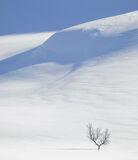 Art Of Snow 10, Anderdalen Nat Park, Senja, Norway, National Park, birch, trees, trunk, blue, shadows, winter, purity, m photo