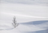 Art Of Snow 2, Anderdalen Nat Park, Senja, Norway, trees, birch, mountainous, National park, plateau, purity, hillocks,  photo