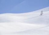 Art Of Snow 7, Anderdalen Nat Park, Senja, Norway, high, mountainous, nationl Park, silver birch, snow, white, blue, sha photo
