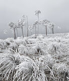 Baltic, Loch A Chroisg, Achnasheen, Scotland, chilling, winter, morning, fragile, straggly, scots pine, trees, frost  photo