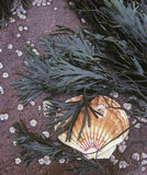Barnacles And Scallop, Big Sands, Gairloch, Scotland, shell, seaweed, sandstone, beach, overcast  photo