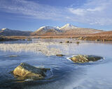 Below Zero, Rannoch Moor, Glencoe, Scotland, fine, winter, morning, dappled, cloud, frozen, embedded, ice, frosted, gras photo