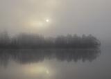Birch Fringe Rusky 1, Loch Rusky, Trossachs, Scotland, fringe, birch, beech, trees, hide and seek, sunrise, dawn, mist,
