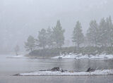 Blizzard Affric, Glen Affric, Highlands, Scotland, heavy snow, texture, vicious, winter, squall, freezing, cold, desolat photo