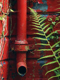 Blood Red Drain, Blairs Loch, Moray, Scotland, drain, paint, decrepit, shed, blue, bracken, green, red, slatted, peeled  photo