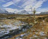 Blue, gold, splendour, Rannoch moor, Glencoe, Scotland, tree, lonely, photo