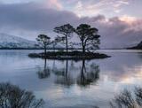 Breaking Dawn Slattadale, Slattadale, Torridon, Scotland, Scots Pine, island, Loch Maree, shimmering, silhouetted, trees photo