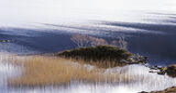 Breeze, Loch Lurgainn, Inverpolly, Scotland, reeds, bay, peak, sunlight, shimmered, birch,blue, reflection, wind, sapphi photo