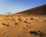 Caramel Dunes, Sossusvlei, Namibia, Africa, massive, Dune No. 45, morning, sunrise, skeletal, trees, shadows, rippled, s photo