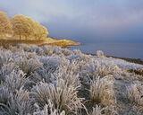 Caramel Ice, Loch A Chroisg, Achnasheen, Scotland, favorite, ginger, sun, frosted, grasses, trees, zero, ephemeral, wint photo