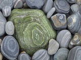 Cauliflower, Talamine Bay, Sutherland, Scotland, rocks, stones, green, coloured, concentric, rings, bed, pebbles  photo