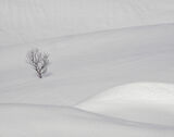 Deep Snow 11, Anderdalan, Senja, Norway, mesmerisingly, beautiful, snow fields, birch, tree, submerged, graphic, lines  photo