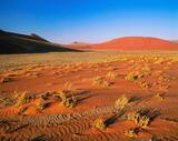 Desert Floor, Sossusvlei, Namibia, Africa, rainbow, colours, orange, sand, blue, sky, angled sunlight, sunlight, virtuos photo