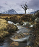 Devil Tree, Rannoch moor, Glencoe, Scotland, desolate, devilish, tree, old, dead, stream photo