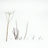 Dont Shoot, Ersfjord Bay, Senja, Norway, fun, seed head, grass, hands up, blonde, Afro, high key, minimalist, stark photo