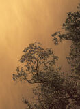 Drenched In Gold, Victoria Falls, Zimbabwe, Africa, cataracts, falls, spray, backlit, golden, morning, light   photo