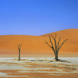 Dry Vlei, Dead Vlei, Sossusvlei, Namibia, Camel Thorn trees, salt pan, surreal, primary, colours, clear, blue, sky, oran photo