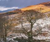 Dundonnell Tapestry, Dundonnell, Wester Ross, Scotland, river, birch, trees, flanks, mountain, bracken, glen, transient, photo