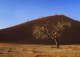 Dune 45 Dawn, Sossusvlei, Namibia, Africa, vast, red, sand dunes, blue skies, radiant, tree, sidelit, massive, scale, pe photo