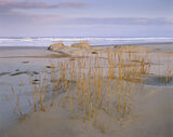 Lossiemouth, Moray, dunes, dune, light, soft, wind photo
