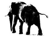 Elephant Etching, Chobe, Botswana, Africa, backlit, setting sun, sprayed, water, shine, contre-jour, stylised photo