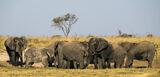 Elephant Gathering, Elephant Sands, Botswana, Africa, waterhole, evening, game drive, dry, wet, filthy, elephant, herd photo