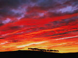 Fire Over Roseisle, Roseisle, Moray, Scotland, saturation, sky, summer, astonishing, view, scots pine, hill, line, sunri photo
