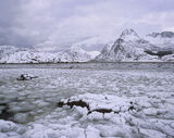 Frigid Flakstad Fjord, Flakstad, Lofoten, Norway, cold, bone chilling, hypothermic, exposure, sublime, raw, majestic, fj photo