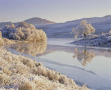 Frosted Paradise, Loch Achanalt, Strathbran, Scotland, cold, winter, temperatures, tree, white, hoar, frost, river, refl photo