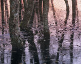 Woodland Freeze, Kingussie, Cairngorm, Scotland, flooding, sunset, pink, indigo, blue, shadows photo