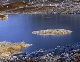 gold, sovereign, Dava, moor, Dava moor, Scotland, Moray, disc, frost, ice photo