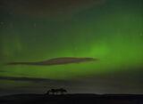 Gollanfield Pines Aurora, Gollanfield, Highland, Scotland, luminously, green, scots pine, trees, aurora, understated photo