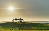 Green Pastures Gollanfield