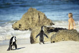 Harmony, Boulders Beach, South Africa, Africa, penguins, regulation, segregation, beach, breed, humans, shuffle photo