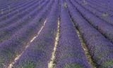 Heaven Scent, Bonnieux, Provence, France, purple, rows, flowering, lavender, diagonal, lines, chalky, soil, photo