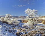Hoar Frost, Loch Glascarnoch, Highlands, Scotland, birch, frost, snow, magic, transform, winter, paradise, flecks, cloud photo