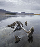Ice Alien, Loch Droma, Highlands, Scotland, submerged, tree, stumps, entombed, ice, alien, Garve, Ullapool photo