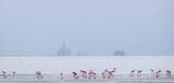 Industrial Flamingo, Walvis Bay, Namibia, Africa, bleak, fog, cheerless, cold, flamingo, exotic, industrial, juxtapose,  photo