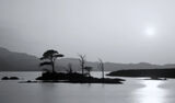 Island In The Sun Mono, Loch Assynt, Sutherland, Scotland, island, scots pine, trees, silhouetted, Spring, haze photo
