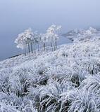 Jack Frost, Loch A Chroisg, Achnasheen, Scotland, minus, Celcius, lowest, grasses, hoar frost, misty, crust, ice  photo