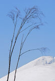 Light Fingered, Kinlochewe, Torridon, Scotland, simplicity, birch, trees, fragile, wind, winter, caress, white, Beinn Ei photo