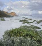 Misty Cliffs Scarborough, Scarborough, South Africa, Africa, southern coast, cape Town, Chapmans Peak, mist, cliffs, flo photo