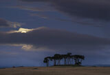 Moonset Gollanfield 2, Gollanfield, Highlands, Scotland, moonset, moon, horizon, cloud, pine, copse, sunrise photo