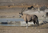 Oryx at Waterhole 2, Etosha, Namibia, Africa, waterholes, wilderness, heat, water, animals, Gemsbok, beautiful photo