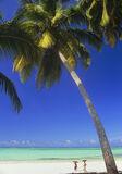 Palm Beach, North Coast, Zanzibar, Africa, beach, exotic, idyllic, coast, plam trees, coral, white, sand, turquoise    photo