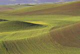Palouse Velvet, Palouse, Washington State, USA, massive, agricultural, granary, rolling, fields, wheat, texture, lines  photo